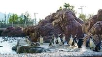 【上越水族館】見所・マゼランペンギンの飼育数日本一