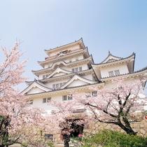 ◆桜と福山城
