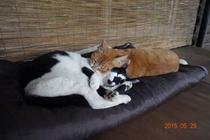 高ソメキャンプ場の看板猫