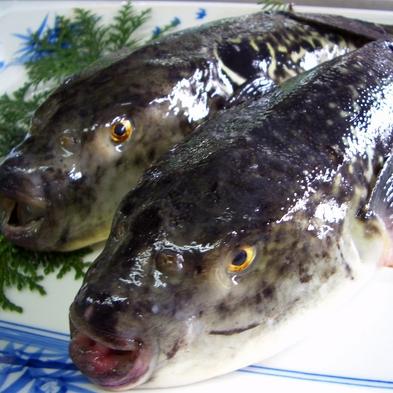 ◆コラーゲンたっぷり♪福を呼ぶ魚「河豚」をお一人様に1匹!ふぐ満喫フルコース♪ 伊根の舟屋×天然温泉