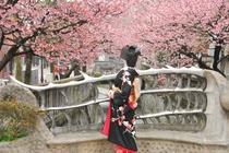 熱海桜まつり