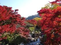 熱海紅葉1