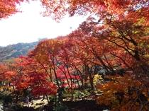 熱海紅葉3