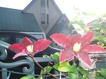 さんぽみちの周りにはお花がいっぱいです。