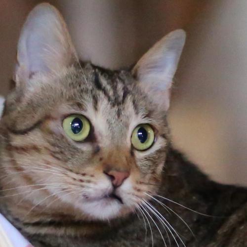 支配猫「かぼにゃん」が、みなさまをおもてにゃしいたします♪