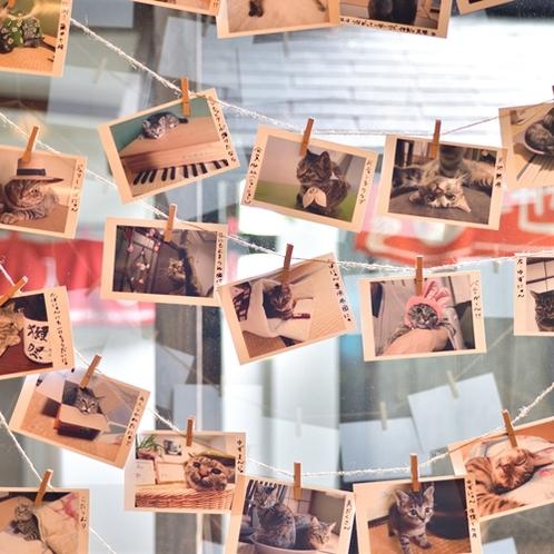 【ロビー】当館自慢の猫ちゃんたちの写真もいっぱいかざっています♪