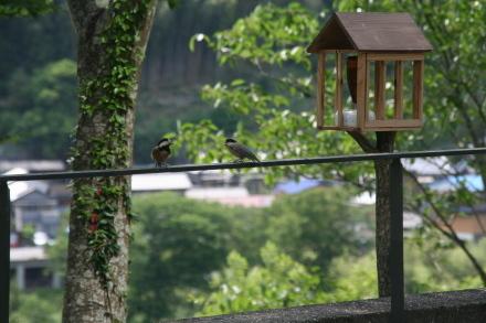 小鳥の声で目が覚めます