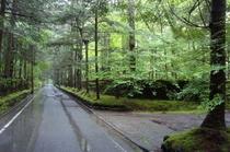 6月の雨上がり:旧軽井沢別荘地にて!
