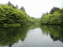 新緑の雲場池(宿から車7分)