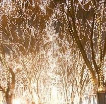 冬の観光スポット「光のページェント」