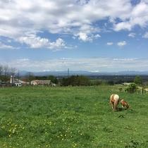 【ハイジ牧場】北海道の大自然と動物のたくましさを体験ください♪