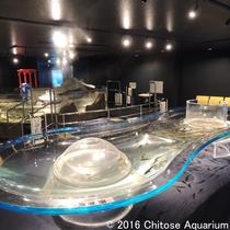 【千歳水族館】インディアン水車とタッチプール