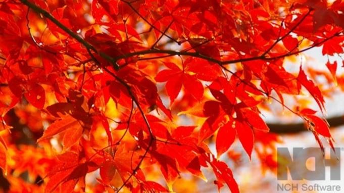 ◆秋本番◆色づく紅葉…ライトアップ…秋の貴船を満喫♪京風会席!<1泊2食付>