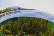 海中からの桜島
