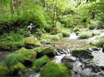 目の前に広がる秋川渓谷