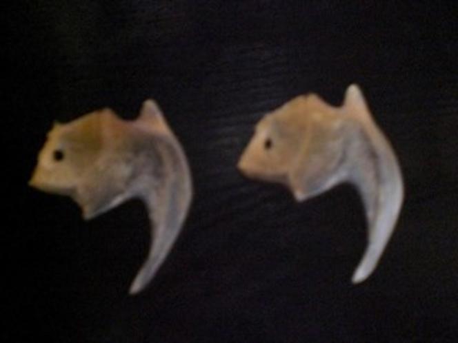 この骨が金目鯛の中にある「鯛のたい」です。