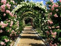 はままつフラワーパークのバラのトンネル