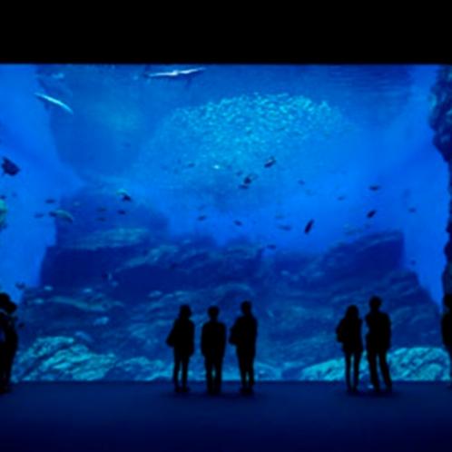 仙台うみの杜水族館~チケット付きプランをご用意しております