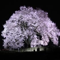 *わに塚の桜(夜)