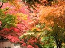 奥湯河原の紅葉【11月下旬~】