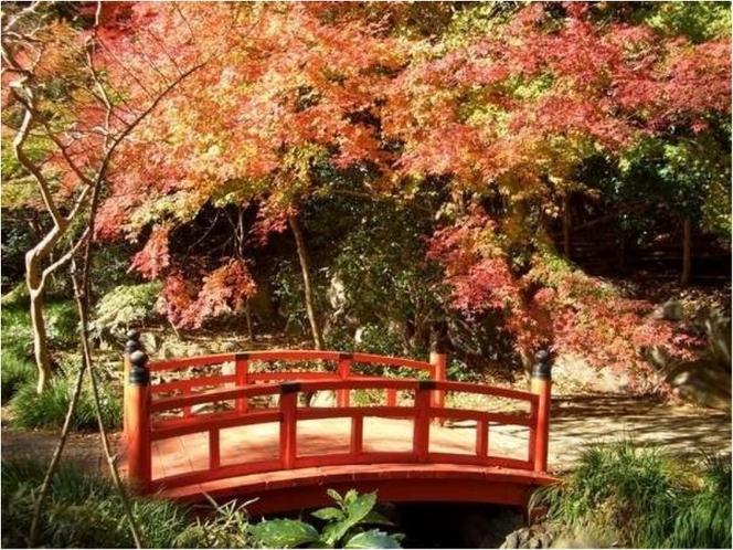 万葉公園の紅葉【11月下旬~】