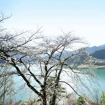 神流湖と桜
