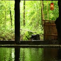 新緑の温泉