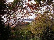 秋の津森山