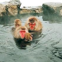 世界的に珍しい温泉に入るお猿さん(地獄谷野猿公園)