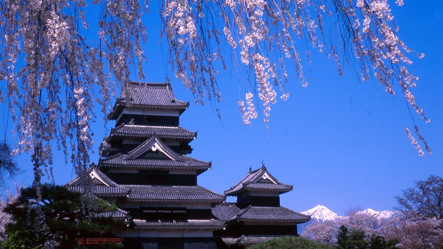 桜の名所 春の松本城