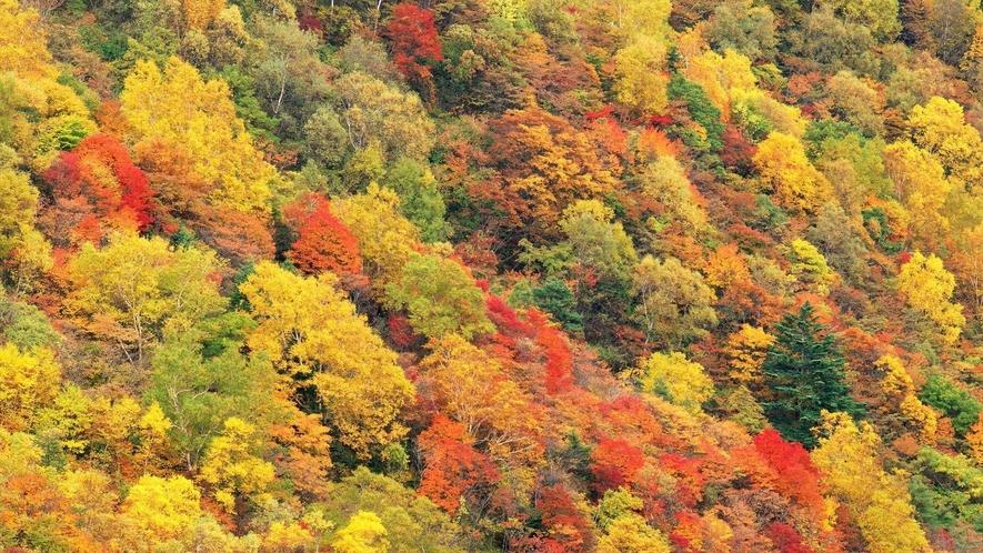 秋の美原高原