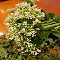 春の山菜フェア ワサビの花 香りとちょっぴり辛味がクセになります。