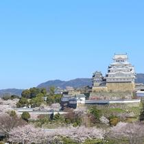 <姫路城 三十六景>四季:春 姫路城と桜 ※提供 姫路市