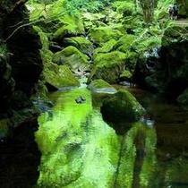 赤目四十八滝■竜ヶ壺■森林浴