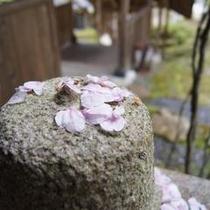 桜散る季節の一瞬のかがやき