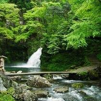 赤目四十八滝■千手滝■森林浴