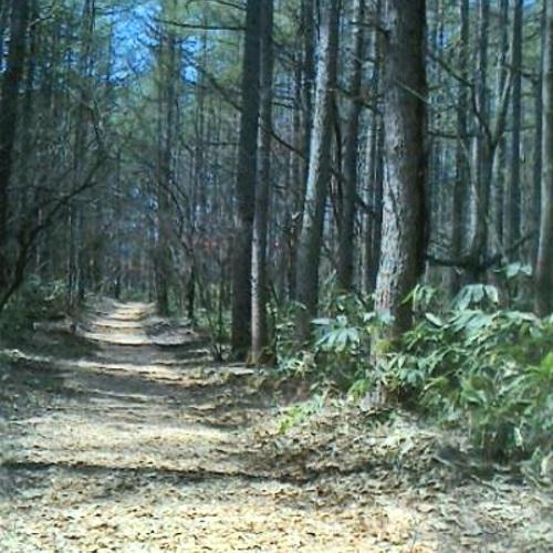 森林ウォーキングを楽しもう!