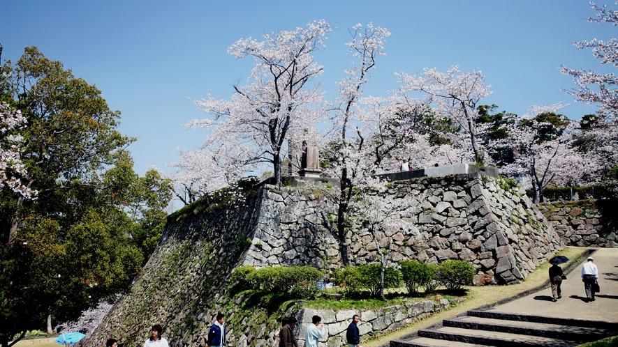 *【周辺】城山の石垣と桜