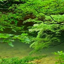 清廉なせせらぎを望む湯瀬渓谷散策路