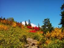 2012年紅葉1 火打山登山道