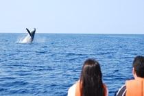クジラみえた~!!!!