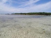 歩いて5分の備瀬崎には、たくさんのお魚が集まっています!