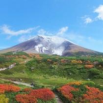 【秋の旭岳】青空と紅葉のコントラスト