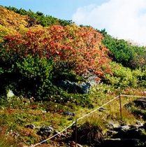 9月27日の旭岳紅葉