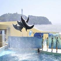 【新江ノ島水族館】水族館のある「片瀬江ノ島駅」までは、乗換なしの約20分で到着!
