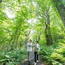 *【かみくら周辺の景色:トレッキング】当館から約2キロで出会える手つかずの原生林