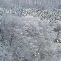 *【かみくら周辺の景色:冬】かみくらに向かう道中の景色も楽しみながらお越しください