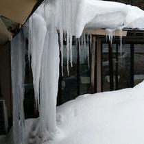*【かみくら周辺の景色:冬】屋根から伸びた大迫力の氷柱。当館の至る所に氷柱が伸びています