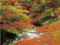 箒川渓谷紅葉