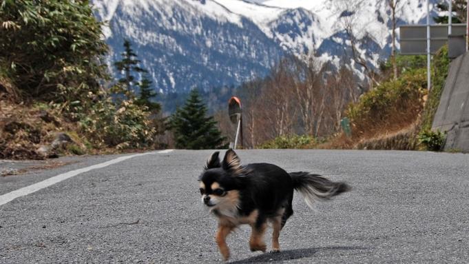 春から夏のペット(小型室内犬:5kg以下)同伴プラン